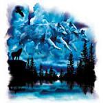 Wolf Sky - A12797A