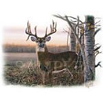 Buck - A6104C